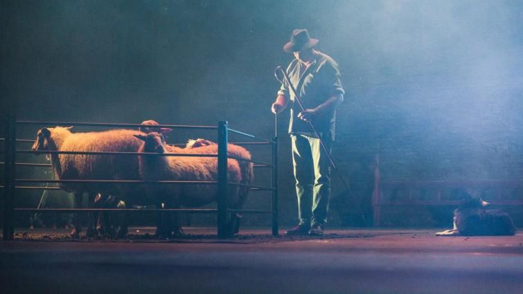 Ein Bauer hat fünf Schafe auf die Bühne gebracht
